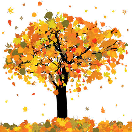 sycamore leaf: Beautiful autumn tree for your design.   Stock Photo