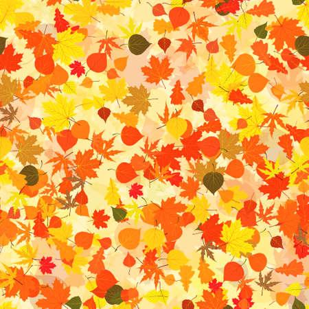 Autumn leaves background.  photo