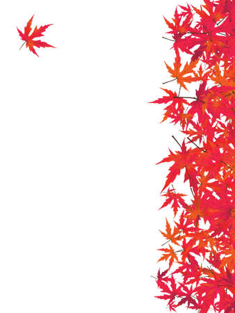 japanese maple: Japanese red maple (acer palmatum rubrum). EPS 8 vector file included
