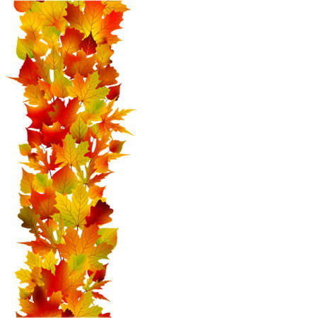 fall border: Multicolored autumn leaves of maple isolated on white background.
