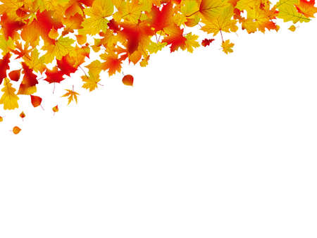 Autumn card of colored leafs isolated over a white background.