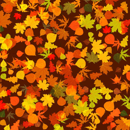 profusion: Autumn leaves, bright background.