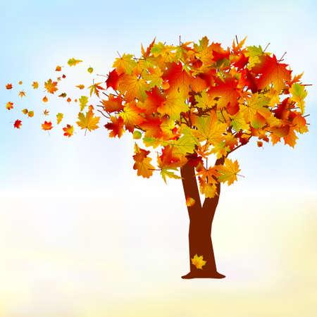 Maple tree, autumn leaf fall. Vector