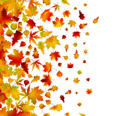 Autumn leaves, background. Stock Vector - 9714328