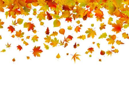 autumn background: Background of autumn leaves. EPS 8 vector file included