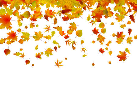 Background of autumn leaves. EPS 8 vector file included Vector