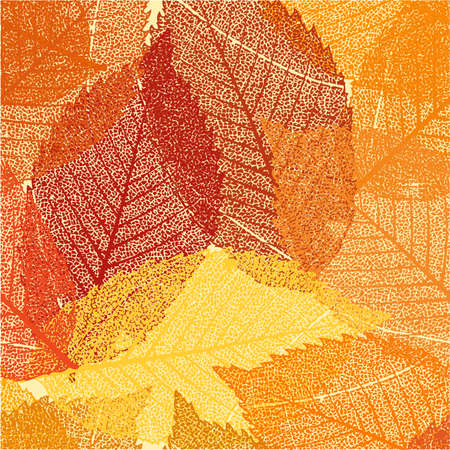 Dry autumn leaves template   Stock Vector - 15373041