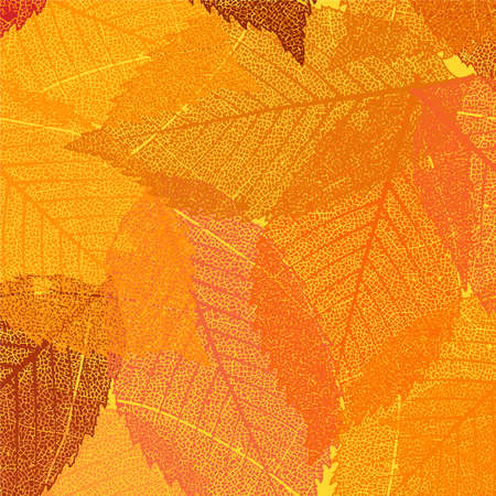Dry autumn leaves template  Vector