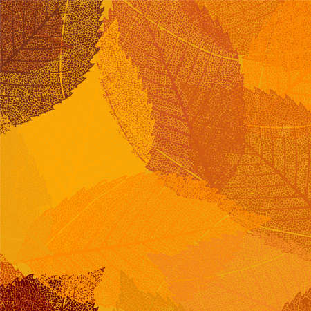 Dry autumn leaves template. EPS 8 vector file included Vector