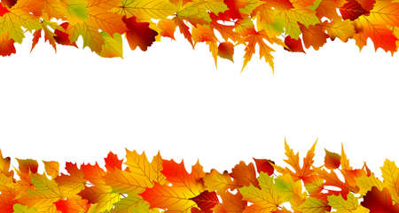 Colorful autumn border made from leaves, isolated on white background   Vector