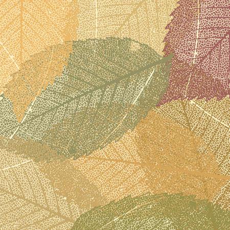 aspen: Dry autumn leaves template.