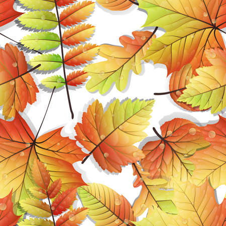 Colorful autumn seamless leaves isolated on white background. EPS 10 vector file included Vector