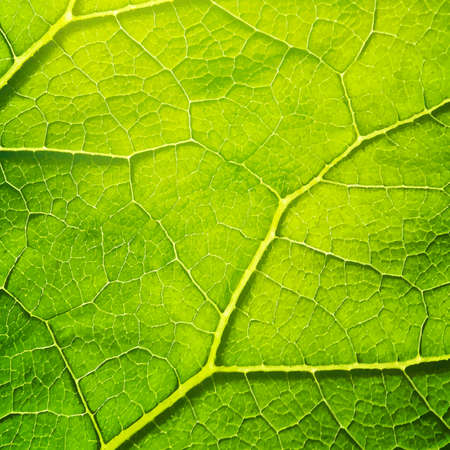 macro: Vector green leaf macro background. EPS 10 vector file included Illustration