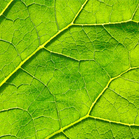 macro: Vector green leaf macro background.