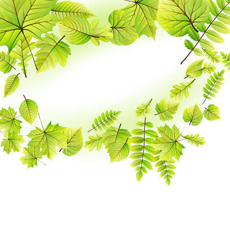 greenness: Green leaves frame isolated on white background.