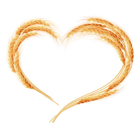 cultivo de trigo: Espigas de trigo del corazón aislado en el fondo blanco. Vectores