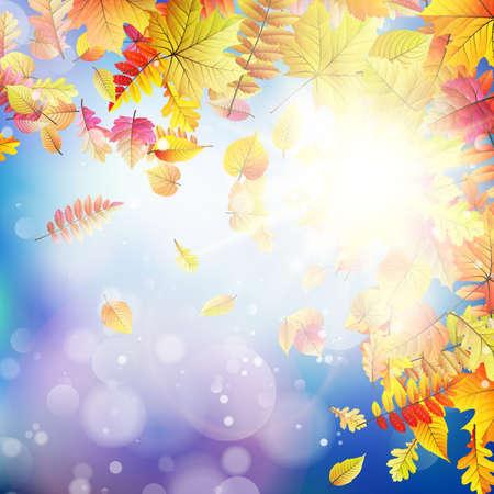 autumnal: Autumnal natural bokeh with sun.
