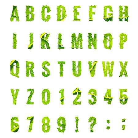 leaf lettuce: Green leaf lettuce alphabet.