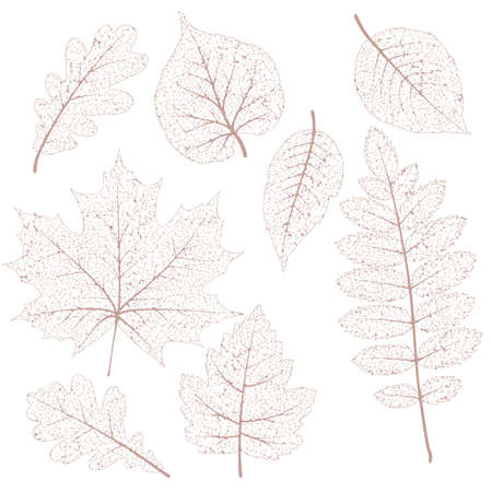 Autumn leaves, isolated dried leaves set.   Vectores