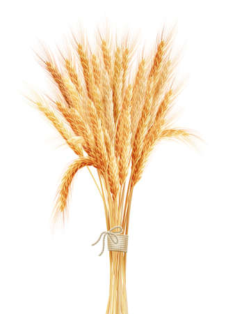 bundles: Wheat ears isolated on white background.
