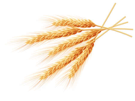 and wheat: Wheat ears isolated on white background.