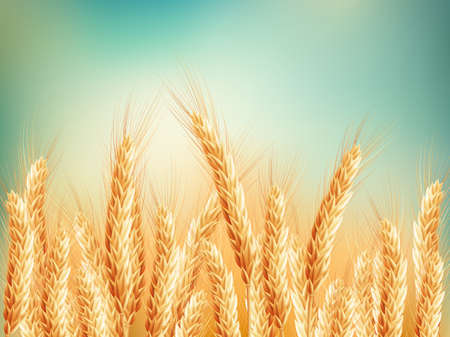 Gold wheat field and blue sky. EPS 10 vector file included Stock Illustratie