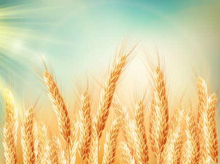 Gouden tarwe veld en zonnige dag. vector bestand opgenomen