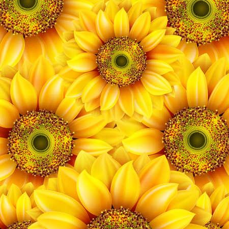 botanical gardens: Sunflowers, realistic illustration.  Illustration
