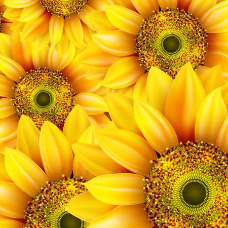 stamens: Sunflowers, realistic illustration.  Illustration