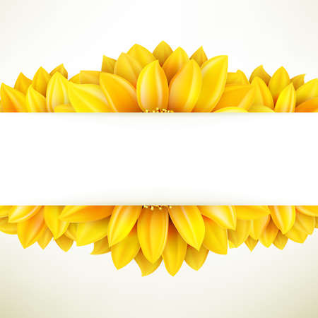 sunflower seed: Sunflower on white background.  Illustration