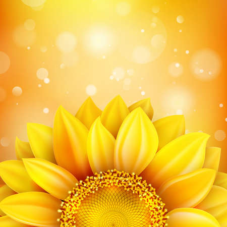 sunflower seed: Floral autumn background with sunflower. EPS 10 vector file included