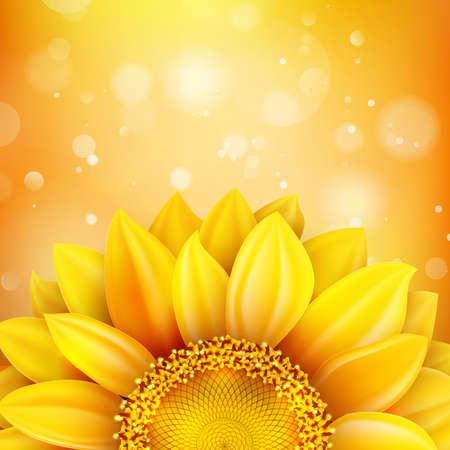 girasol: Oto�o de fondo floral con el girasol. Archivo EPS 10 vector incluido