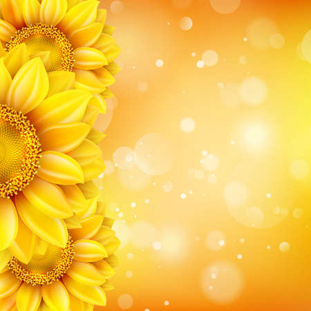 natural beauty: Macro SunFlower Background with bokeh.