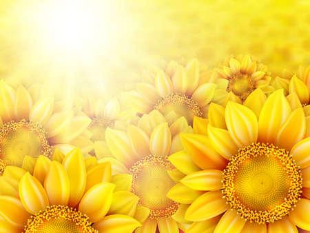 stamen: Beautiful yellow sunflower petals with summer sun.   Illustration