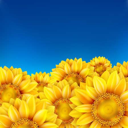 cielo: Campo de girasoles y cielo azul.