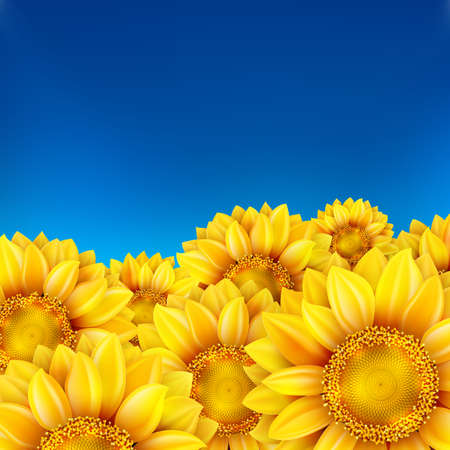 heaven: Field of sunflowers and blue sky.    Illustration