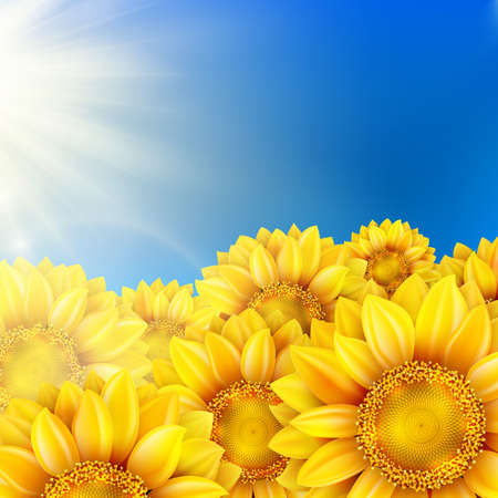 sunflowers: Beautiful sunflowers in the field with bright blue sky.    Illustration