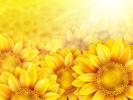crop circle: Beautiful yellow sunflower petals with summer sun.  Illustration