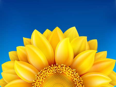 Sunflower and blue sky background. Vector Illustration