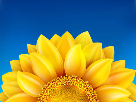 sky background: Sunflower and blue sky background.