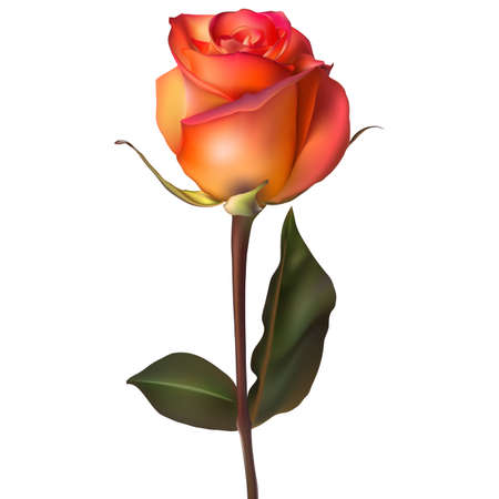 bouquet de fleurs: Rose orange rouge. Illustration