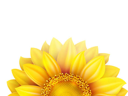 head shot: Sunflower isolated on white background. EPS 10 vector file included