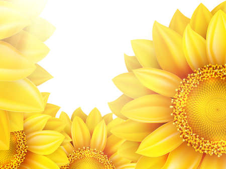 sunflower isolated: Sunflower isolated on white background. EPS 10 vector file included
