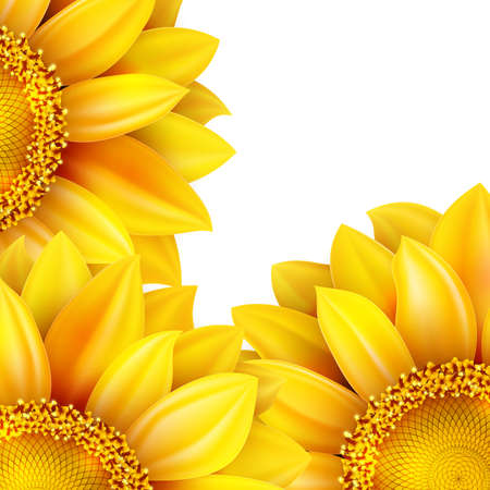 sunflower isolated: Girasol aislado en el fondo blanco. Archivo EPS 10 vector incluido Vectores