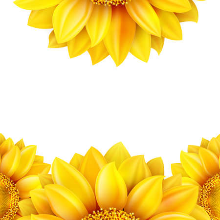 warmth: Sunflower isolated on white background. EPS 10 vector file included
