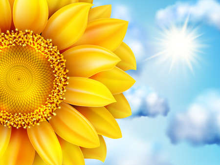 pollination: Beautiful sunflower against blue sky. EPS 10 vector file included