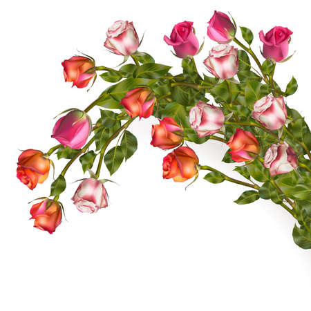 rosa: Isolated bouquet roses.  Illustration