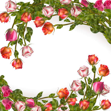 rosas blancas: Garland rosas aislados en blanco. Vectores