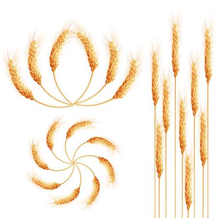 dessin au trait: Oreilles de blé détaillées énoncées. Symboles agricoles isolé sur fond blanc. Les éléments de design pour l'emballage de pain ou de la bière. Étiquette 10 fichier vectoriel EPS inclus