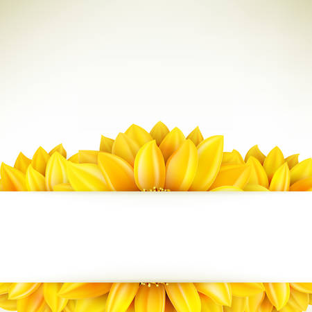 on white: Sunflower on white background.